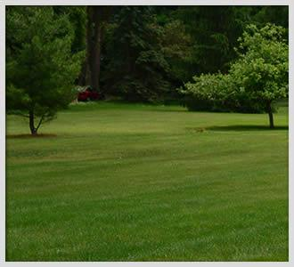 Residential and Commercial Lawn Care Services Georgia
